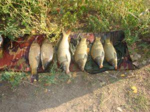 Конкурс на лучшую фотографию на рыбалке в РК «Три Карася»