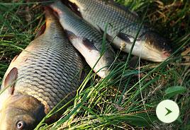 Конкурс на самую смешную /оригинальную фотографию на рыбалке в РК «Три Карася»